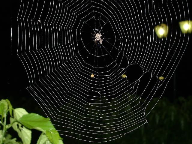 120219spiderweb